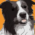 Canvas Print BORDER COLLIE ABRICOT
