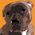Canvas Print AMERICAN STAFFORDSHIRE TERRIER ABRICOT