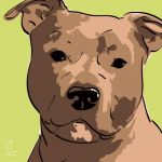 Canvas Print AMERICAN STAFFORDSHIRE TERRIER LIME