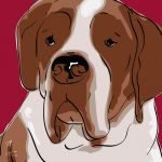 Canvas Print ST. BERNHARD BORDEAUX