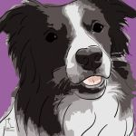 Canvas Print BORDER COLLIE VIOLET