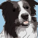 Canvas Print BORDER COLLIE LIGHT BLUE