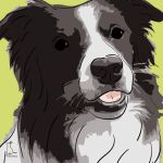 Canvas Print BORDER COLLIE LIME