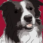 Canvas Print BORDER COLLIE BORDEAUX