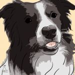 Canvas Print BORDER COLLIE GOLD