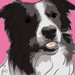Canvas Print BORDER COLLIE PINK