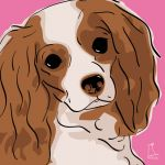 Canvas Print CAVALIER KING CHARLES SPANIEL PINK