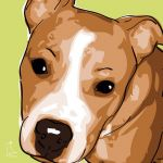Canvas Print STAFFORDSHIRE BULLTERRIER LIME