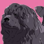 Canvas Print PORTUGUESE WATER DOG PINK