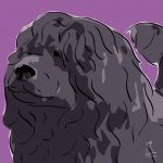 Canvas Print PORTUGUESE WATER DOG VIOLET