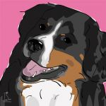 Canvas Print BERNESE MOUNTAIN DOG PINK