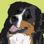 Canvas Print BERNESE MOUNTAIN DOG LIME