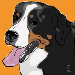 Canvas Print BERNESE MOUNTAIN DOG ABRICOT