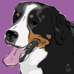 Canvas Print BERNESE MOUNTAIN DOG VIOLET