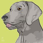 Canvas Print WEIMARANER LIME