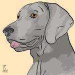 Canvas Print WEIMARANER GOLD