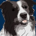 Canvas Print BORDER COLLIE DARK BLUE